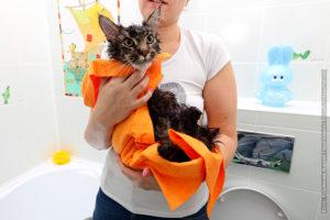 кот после мытья