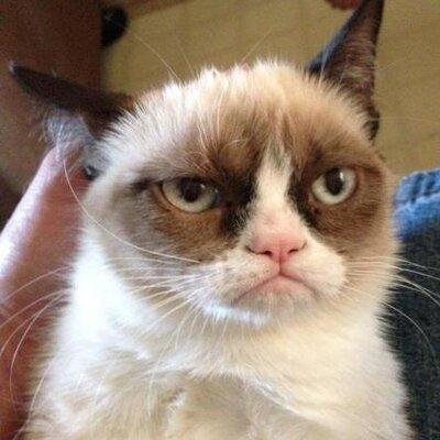 Самый грустный котик