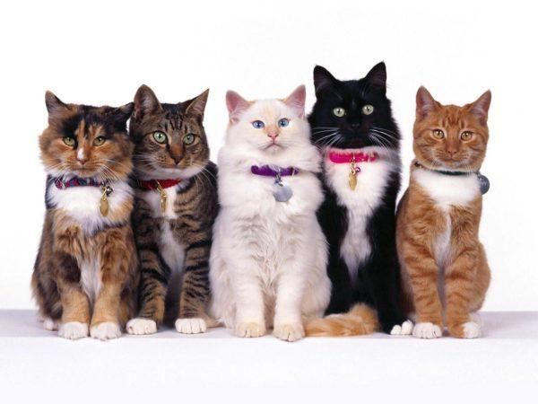 кошки на белом