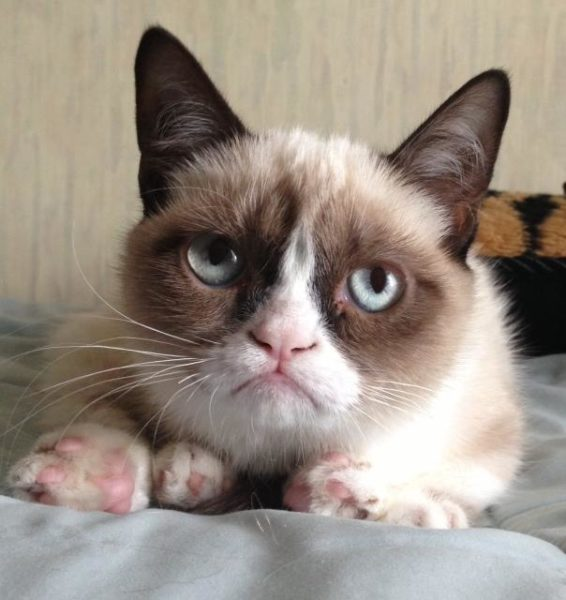 Грустный котик Тард