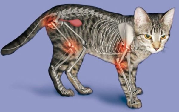 Артрит у кошек