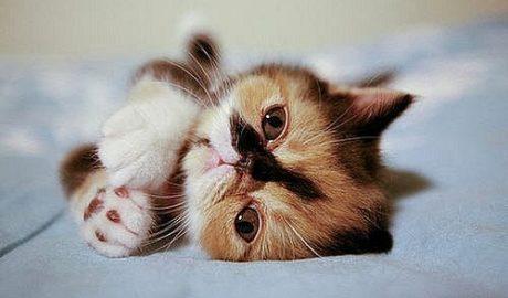 Аскариды у кошек. Симптомы и лечение