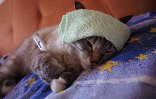 Болезни котят