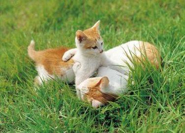 Что делать если кошку укусил клещ