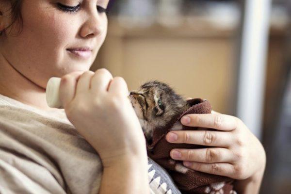 Что нужно делать, если у маленького котенка большой живот 5