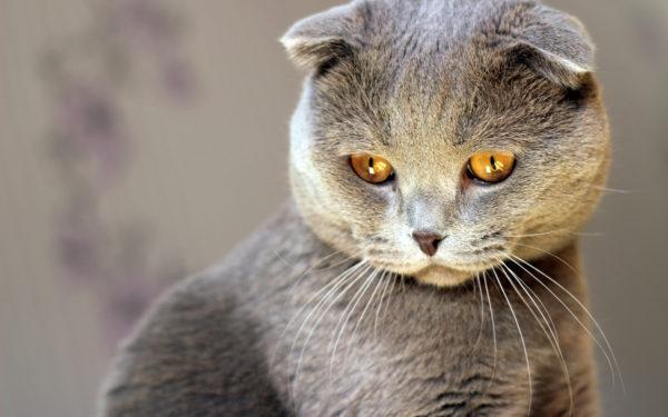 Доклад о кошках