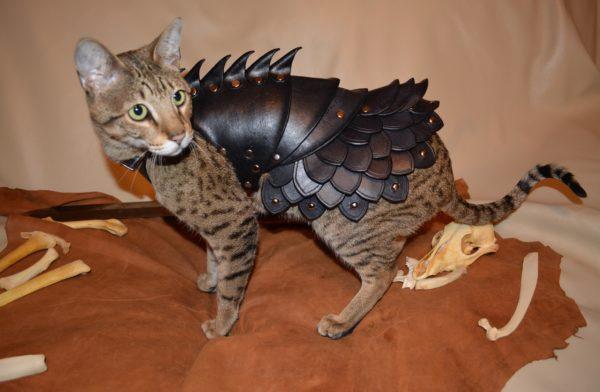 Доспехи для кошек