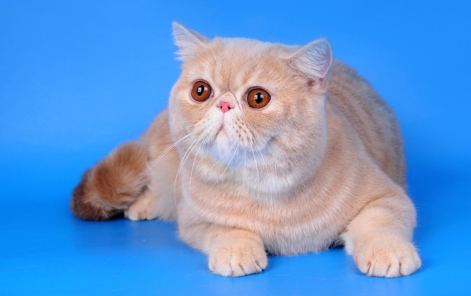 Кошка зевает фото организациях ип