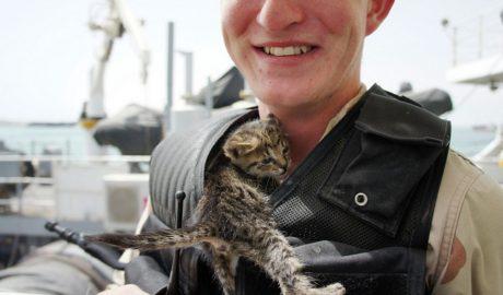 История I Моряки ВМФ США стали спасителями котят