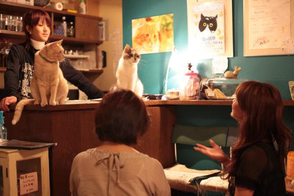 Кафе в Японии для кошек