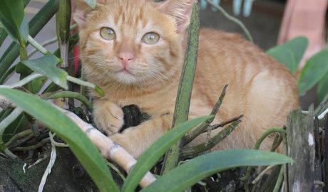 Как найти пропавшего котёнка