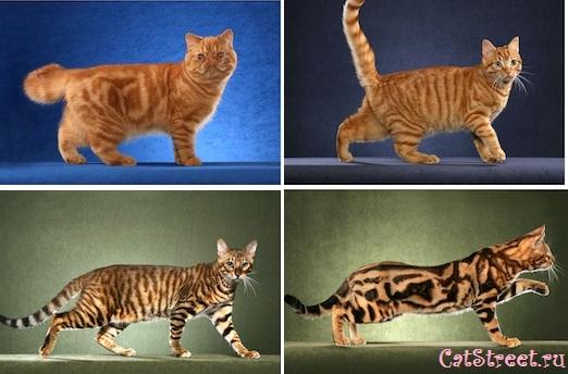 Как правильно выбирать клички для котов с учетом особенностей их характера, цвета и пола 10