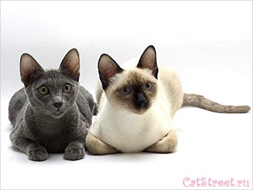Как правильно выбирать клички для котов с учетом особенностей их характера, цвета и пола 2