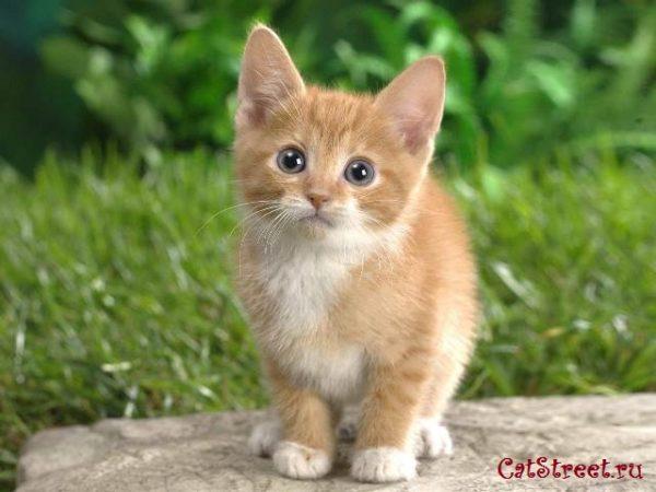 Как правильно выбирать клички для котов с учетом особенностей их характера, цвета и пола 4