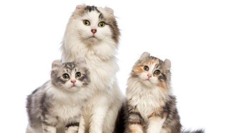 Как правильно выбирать клички для котов с учетом особенностей их характера, цвета и пола