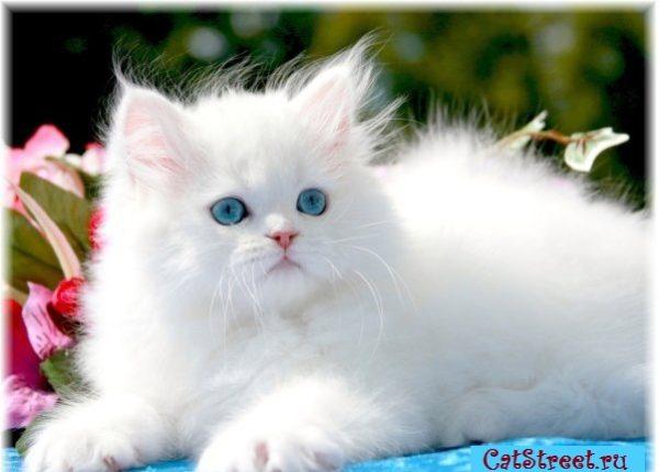 Как правильно выбирать клички для котов с учетом особенностей их характера, цвета и пола 7