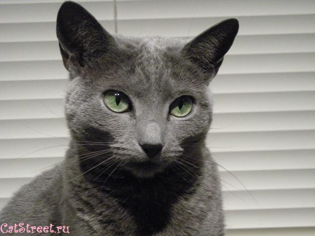 Как правильно выбирать клички для котов с учетом особенностей их характера, цвета и пола 8