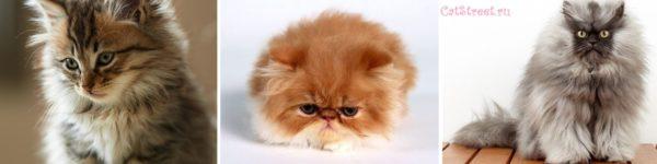 Как правильно выбирать клички для котов с учетом особенностей их характера, цвета и пола 9