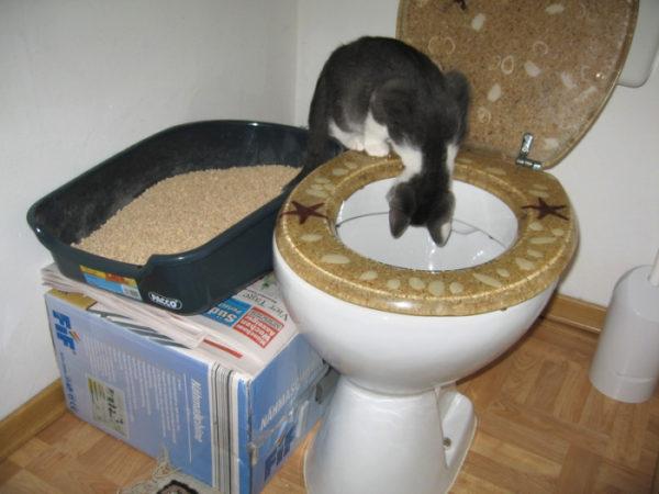 Как приучить котёнка к туалету