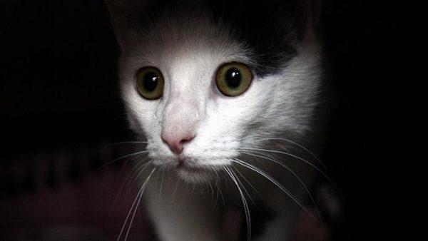 Как видят кошки 1