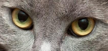 Как видят кошки 3