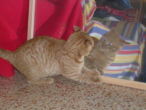 Как видят кошки 4