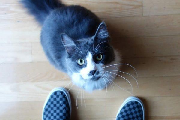 Как видят кошки 5