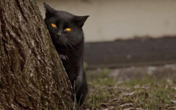 Как видят кошки2