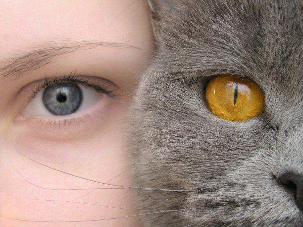 Какие цвета различает котенок