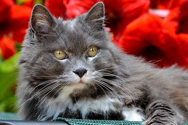 Какой возраст у кошки по человеческим меркам