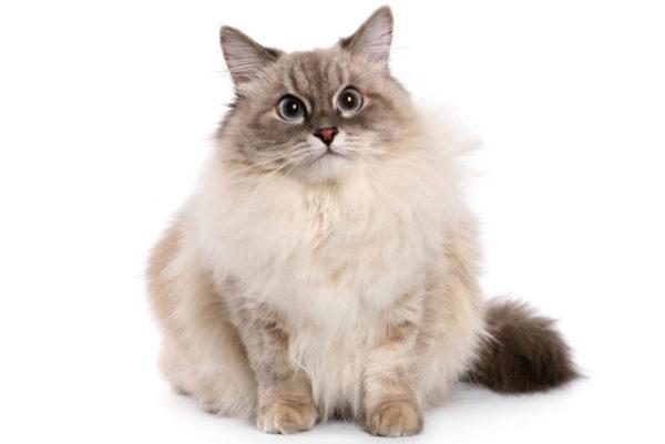 Клички кошек А