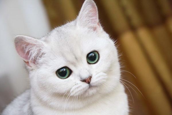 Клички кошек Б