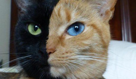 Клички кошек Ч