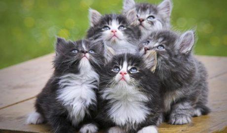 Клички кошек Е