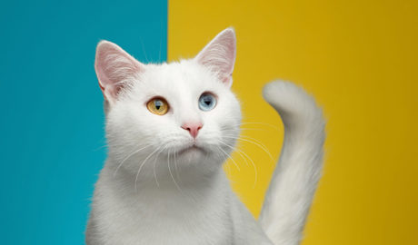 Клички кошек Э