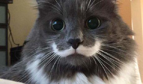 Клички кошек Ф