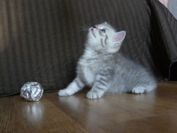 Клички кошек Г