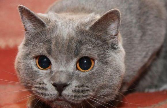 Клички кошек И