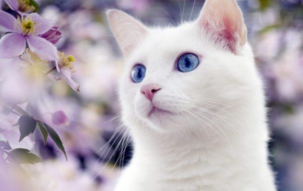 Клички кошек М