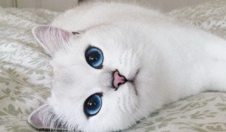 Клички кошек Н