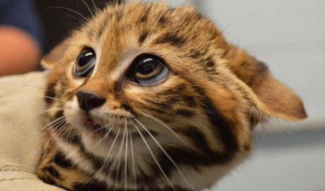 Клички кошек Р