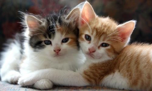 Клички кошек С