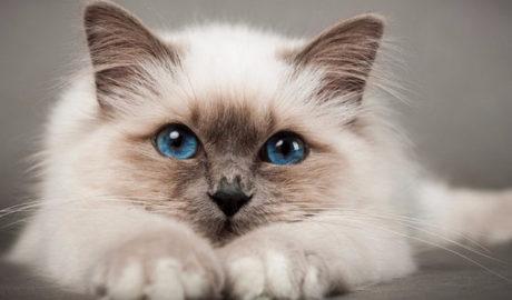 Клички кошек Ш