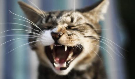 Клички кошек Т