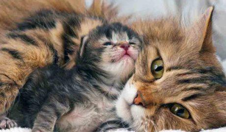 Клички кошек У