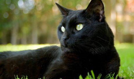 Клички кошек В