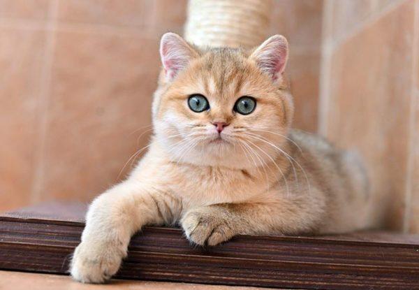 Клички кошек Х