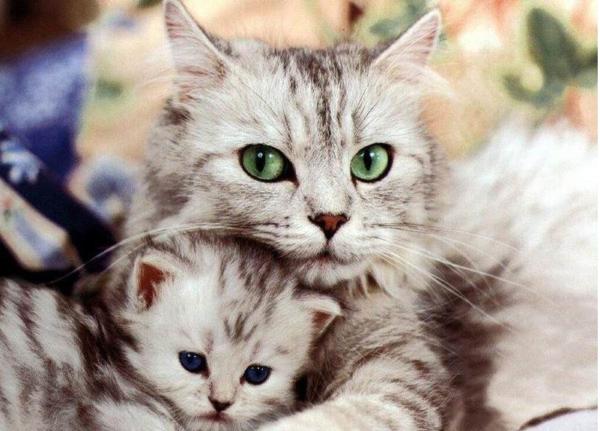 Клички кошек Я