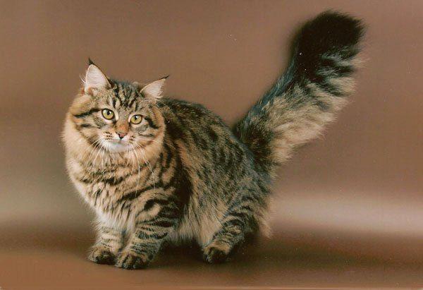 Клички кошек Ж