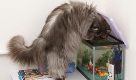 Корм для котят